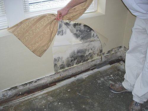 Черная плесень в доме: чем опасна и как избавиться