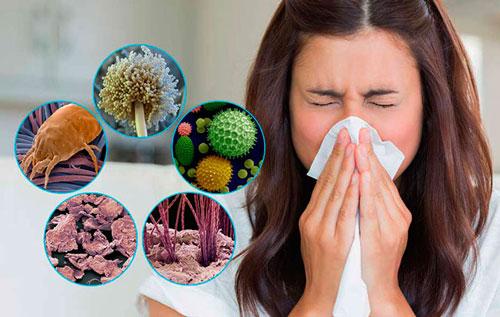 Пылевые клещи: как обнаружить и избавиться, аллергия и симптомы, чего боятся
