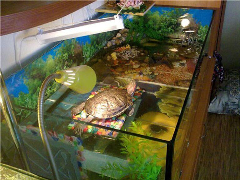 первую содержание и уход за красноухой черепахой дней назад закончили