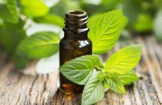 Лечебные свойства и применение эфирного масла пачули