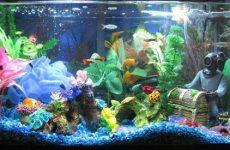 Как содержать аквариумных рыбок, почему болеют, неприхотливые виды и их совместимость
