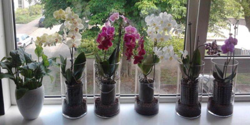 Выбор горшка и грунта для орхидеи, пересадка и уход, почему вянут и желтеют листья