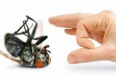 Как быстро избавиться от мух в комнате квартиры или дома?