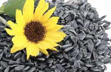 Польза семечек подсолнуха для женщин и мужчин