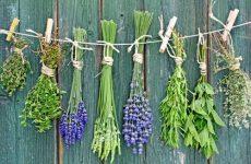 Травы полезные для женского здоровья