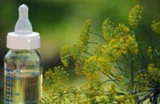 Инструкция по применению укропной воды для новорожденных: приготовление в домашних условиях