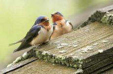 Что означает если птица залетела в окно дома?