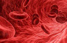 Очищение крови эффективными народными средствами в домашних условиях
